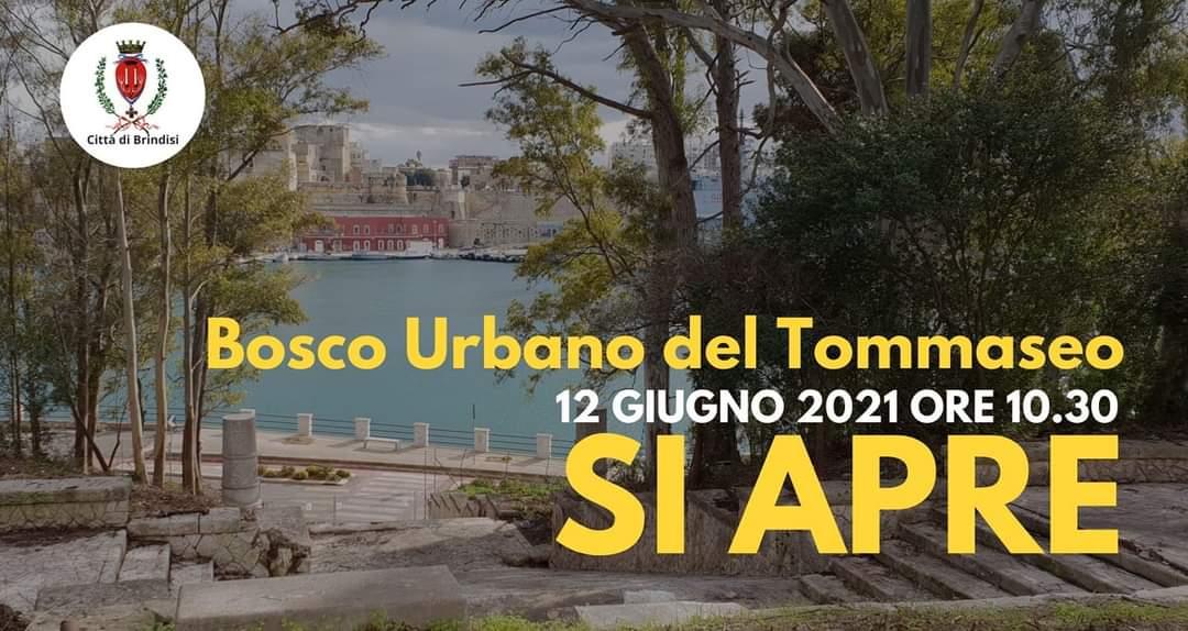 """Rossi: """"Il Bosco del Tommaseo diventerà un luogo simbolico di Brindisi"""""""